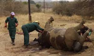cazadores-furtivoas-rinocerontes